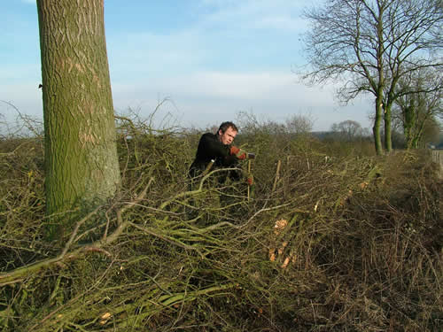 Hedgelaying at Denford