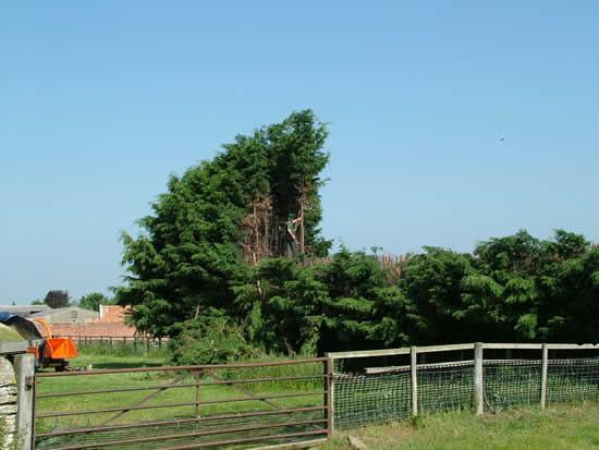 Tree work at Titchmarsh